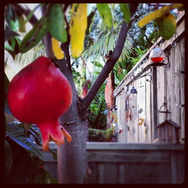 Pomegranate_10952860835_l