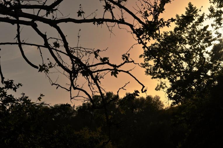 Caspers Sunset